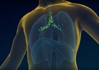 klyatva-hippokrata-transplantologia
