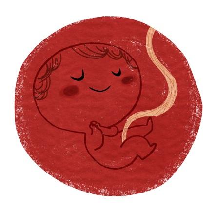 эмбрион в зародыше картинка