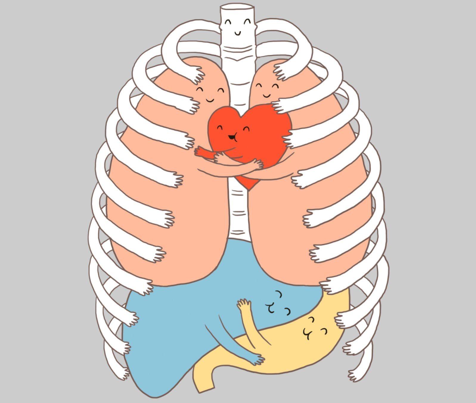 какие органы не пересаживают картинка