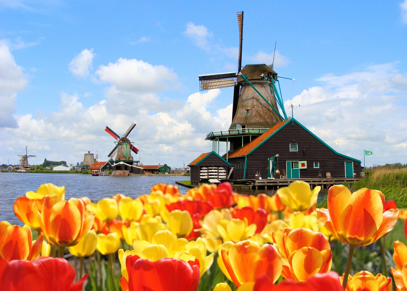 коронавирус в голландии